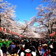 The 2012 Sakura Health Tour Package